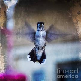 Janice Rae Pariza - Curious Hummingbird