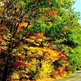 Mae Coy - Curved Road In Autumn Splendor #autumn