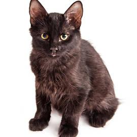Cute Black Kitten Sitting Over White - Susan Schmitz