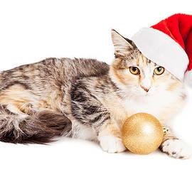 Cute Christmas Calico Kitten - Susan Schmitz