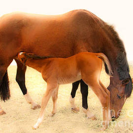 Jerry Cowart - Cute Colt And Mare Nursing
