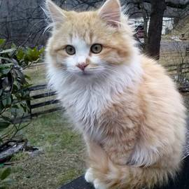 Tammy Brewer - Cute Kitten