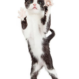 Cute Playful Kitten With Paws Up In Air - Susan Schmitz
