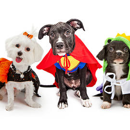 Cute Puppy Dogs Wearing Halloween Costumes - Susan Schmitz