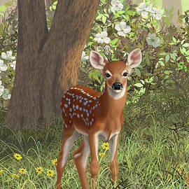 Crista Forest - Cute Whitetail Fawn