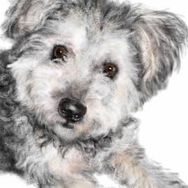 Lois Ivancin Tavaf - Cutie Pie
