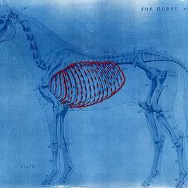 Jane Linders - Cyanotype Horse embroidery anatomy blue print cyanotypes