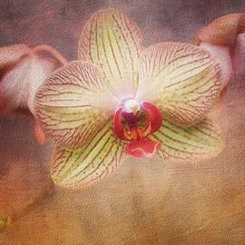 Tom Mc Nemar - Cymbidium Orchid