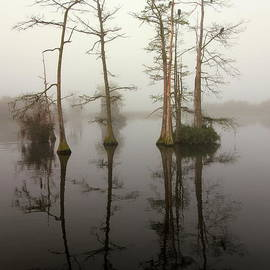 Myrna Bradshaw - Cypress Reflections in the fog
