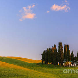 Henk Meijer Photography - Cypress trees at Torrenieri
