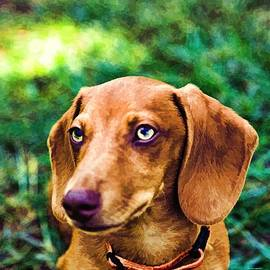 Dennis  Baswell - Dacshund pup