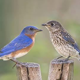 Bonnie Barry - Daddy Bluebird and Juvenile