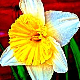 Daffodil in Reto Mode 2015