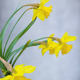 Diane Schuster - Daffodils with Raindrops