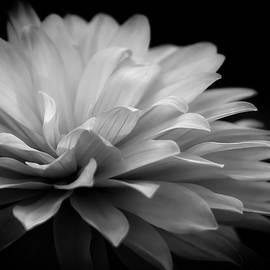 Athena Mckinzie - Dahlia Flower BWII