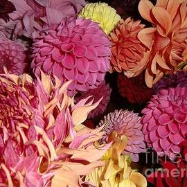 Chris Colibaba - Dahlias From Heaven