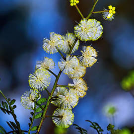 Kaye Menner - Dainty Wildflowers on Blue Bokeh by Kaye Menner