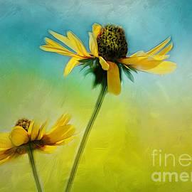 Judi Bagwell - Dancing in the Sun