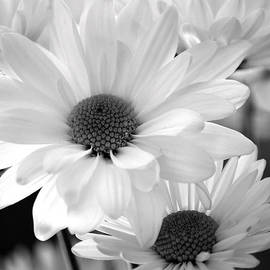 Deb Halloran - Daisies of Yesteryear