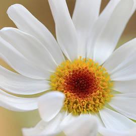 Janice Bajek - Daisytree Daisy