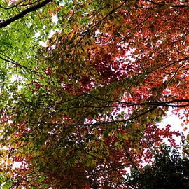 Rumyana Whitcher - Dancing Trees