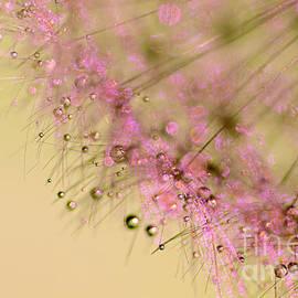 Kaye Menner - Dandelion Desert Dust by Kaye Menner