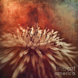 SK Pfphotography - Dandelion portrait