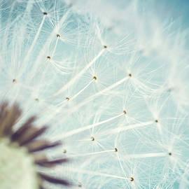 Julia Stefanie Stoehr - Dandelion Seeds