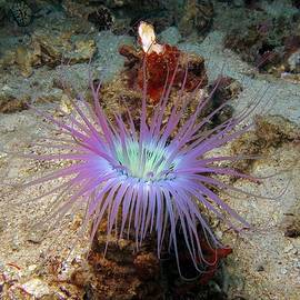 Sergey Lukashin - Dangerous underwater flower