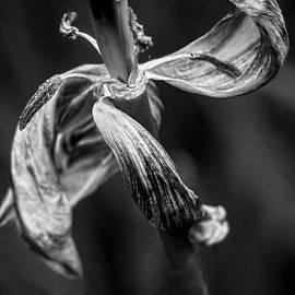 James Aiken - Danse Macabre V