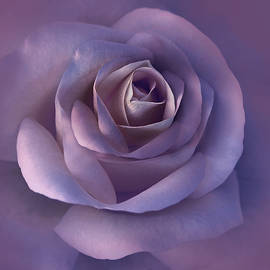 Jennie Marie Schell - Dark Plum Rose Flower