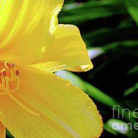 Don Baker - Day Lily Dreams 1