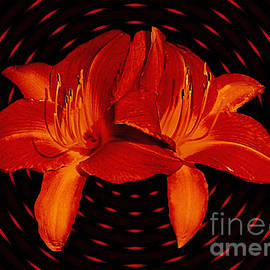 ImagesAsArt Photos And Graphics - Daylilys In Orange Light Streaks