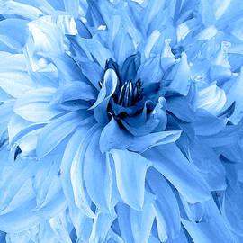 Michele  Avanti - Dazzling Blue Dahlia
