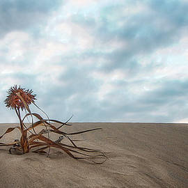 Ronel Broderick - Dead Bush in Sea Sand St Lucia