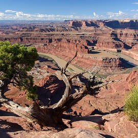 Paul Moore - Dead Horse Point Juniper