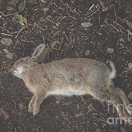 Patricia Hofmeester - Dead rabbit