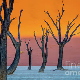 Deadvlei Abstract - Inge Johnsson