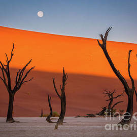Inge Johnsson - Deadvlei Full Moon
