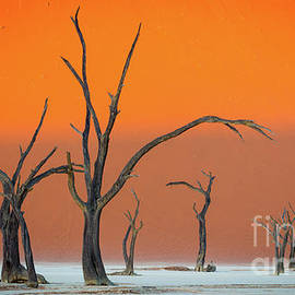 Inge Johnsson - Deadvlei Trees