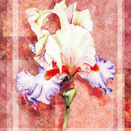 Irina Sztukowski - Decorative Iris Flower