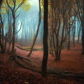 Martin Podt - Deep Forest