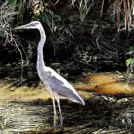 Toni Abdnour - Deep Into The Swamp