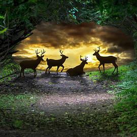 Brian Wallace - Deer Fantasy