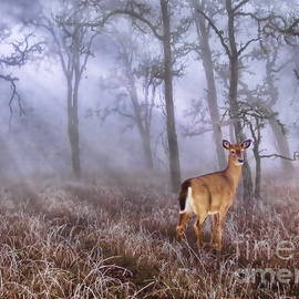 Andrea Kollo - Deer Me