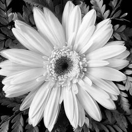Delicate Beauty - Andrew Soundarajan