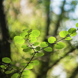 Delicate Leaves Forest Light - Mike Reid
