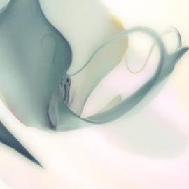 Jayne Logan Intveld - Delicate Orchid
