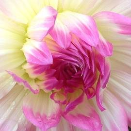 Karen Moren - Delicate Petals of Pink and White