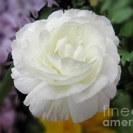 Elizabeth Duggan - Delicate White Blossom
